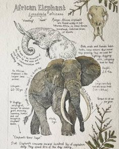 Romantic Illustrated Journal Pages by Lily Seika Jones Seattle-based illustrator Lily Seika Jones composes stunning and charming illustrations, reminiscent of vintage anatomy and botanical...