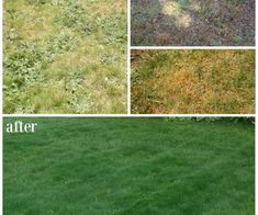 diy outdoor projects Our before & after lawn makeover project - how we went from a patchy, weedy, lawn in bad shape to a healthy, lush, green lawn with Scotts products.