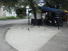 Esta es la esquina de la calle 8 con carrera 18 cementerio católico en Buga. En este lugar tiraron cemento al árbol y dejaron sin posibilidad de que respire.