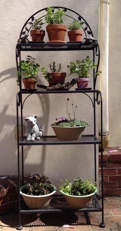 Bakers rack herb garden