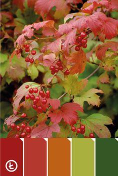 Owocująca kalina #autumn #colours #red