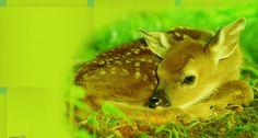 Alfred Robin - deer desktop nexus wallpaper - 1920 x 1080 px