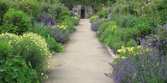 PETOS PERGOLA - Harold Petos pergola/ West Dean Gardens. Fine farver. Sart gul med bleg blålilla