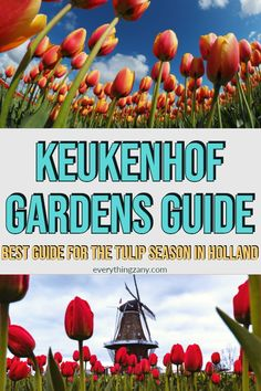 Wondering how to visit Keukenhof Gardens in the Netherlands? Here's our detailed guide to enjoy the tulip season in Holland near Amsterdam. Europe Travel Guide, Travel Guides, Travel Destinations, Amsterdam Tulips, Tulip Season, Magic Garden, Fear Of The Unknown, Garden Guide, Small Backyard Landscaping