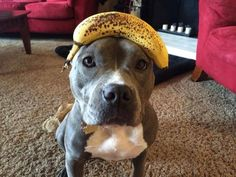 """""""I will keep this banana on my head until you smile."""" 