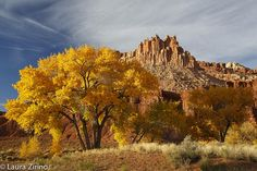 Cottonwoods and the Castle