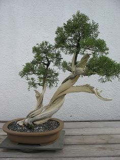 bonsai | Flickr - Photo Sharing!