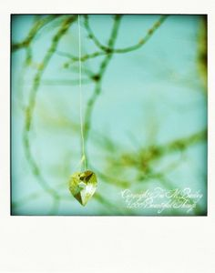 Free Shipping Sale Code NEWYEAR14  Polaroid by 1000beautifulthings, $30.00