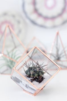 These DIY glass terrariums are probably my most ambitious DIY project to date. I had never worked with glass before but. Terrariums Diy, Glass Terrarium, Diy Planters, Diy Arts And Crafts, Diy Crafts, Terrarium Wedding, Diys, Diy Inspiration, Holiday Centerpieces