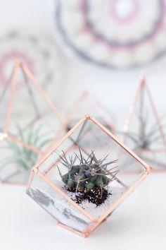 These glass terrariu