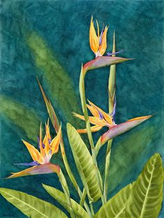 Simply Paradise is a watercolor painting by artist Heidi Rosner that features a blooming bird of paradise flower. By Heidi Rosner. Exotic Birds, Colorful Birds, Watercolor Canvas, Watercolor Paintings, Birds Of Paradise Flower, Meet The Artist, Funny Tattoos, Painting Process, Triptych