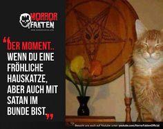 Man sagt ja das Katzen die Boten Satans sind  #horrorfakten