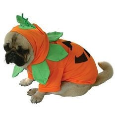 The Pumpkin Pooch Halloween Costume includes an orange top with a Jack-O-Lantern face on the back, an attached orange hood with a pumpkin leaf collar with stem and leaf top. Halloween is an annual holiday that falls each year on October 31st. This celebration dates back over 2,000 years and is also referred to as All Hallows Eve.