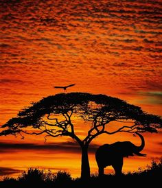 Elephant sunset the-great-outdoors