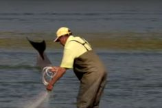News | International Marine Mammal Project