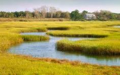 Float thru the marshes of Cape Cod like it's a giant lazy river