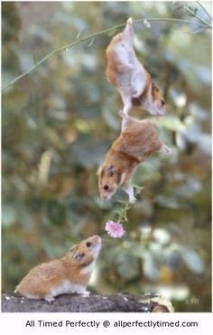 Aww so sweet – Friend lending a hand to help his friend impress the lady with a flower.