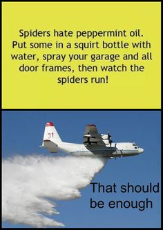 Spiders hate peppermint essential oil! More for the information rather than the picture of the airplane.
