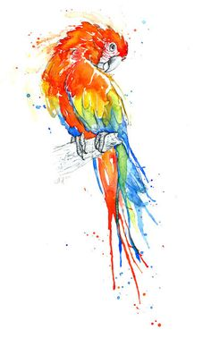 Parrot Series - I - Scarlet Macaw Art Print by amyholliday Watercolor Bird, Watercolor Paintings, Bird Paintings, Watercolors, Parrot Drawing, Art And Illustration, Bird Drawings, Bird Art, Beautiful Birds