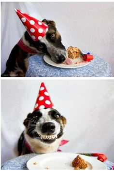 Humour Photos fun Un chien content de son anniversaire ! Animals And Pets, Funny Animals, Cute Animals, I Love Dogs, Cute Dogs, Animal Pictures, Funny Pictures, Dog Pictures, Funny Images