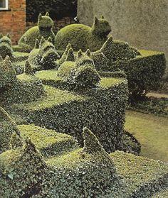 Topiary in a Wolverhampton Garden. Photograph: Tony Ray-Jones, 1970