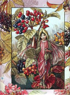 The Wayfaring Tree Fairy - Cicely Mary Barker (1926)