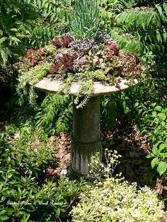 Making a succulent garden in an old birdbath