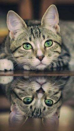 Mirror image - Beautiful green eyes! #Cats