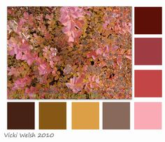 Spirea Palette