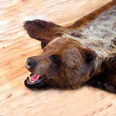 Bear Skin Rug Fur Comforter Grizzly Bears