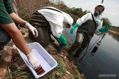 """""""ขบวนการลักลอบทิ้งกากอุตสาหกรรม""""  หน่วยเฝ้าระวังมลพิษทางน้ำของกรีนพีซทำการเก็บตัวอย่างน้ำเสียบริเวณบ่อขยะหลังสถานีตำรวจนิคมอุตสาหกรรมบางปูจ.สมุทรปราการ    © เริงฤทธิ์ คงเมือง/ Greenpeace"""