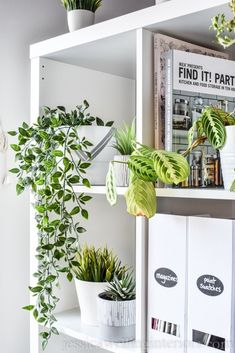 Modern houseplants are a must-have! Learn to style indoor plants like a pro with… Modern houseplants are a must-have! Learn to style indoor plants like a pro with these 6 simple tips on pots, placement and plant choice. Indoor Plant Pots, Indoor Planters, Diy Planters, Hanging Planters, Vegetable Planters, Indoor Garden, Large Plants, Faux Plants, Potted Plants