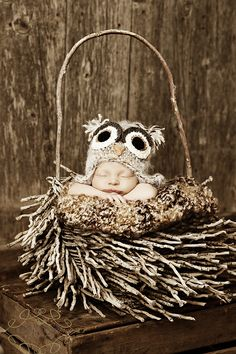 With how much I love owls for baby, I LOVE this picture!