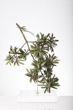 Nic Bladen / Podocarpus latifolius / sterling silver & bronze / 42 cm high