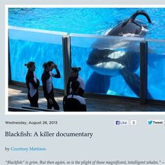 A must see - keeping Orca in captivity is wrong #blackfish #documentary http://mission-blue.org/2013/08/blackfish-a-killer-documentary/ the #truth will out