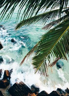 Free your Wild :: Escape to a Beach Paradise :: Tropical Island Adventures :: Soak in the Sun :: Palms + Ocean Air :: See more Untamed Island inspiration @untamedorganica