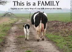 Her family is important  Watch this short slide show on the Humane Dairy Myth here:  http://www.humanemyth.org/happycows.htm