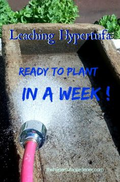 Are you impatient to wait weeks before you can plant a new hypertufa pot? Try this leaching method.