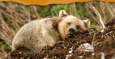 Spirit Bear Adventures Great Bear Rainforest BC Canada
