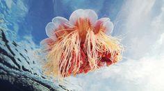 Quizá estas sean las imágenes submarinas más bellas que hayas visto | Pijamasurf