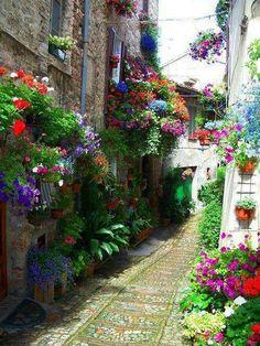 Italian street garden.
