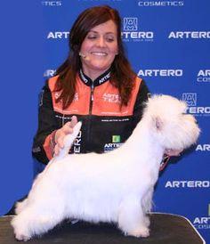 Te presentamos a Judith Camarasa  peluquera canina profesional. ¿Quiere saber cómo trabaja? Tienes la gran oportunidad de verle en acción en las Jornadas Artero en Ifema - Madrid los día 9 y 10 de marzo de 2013 . Conoce todos nuestros cursos de peluquería canina en arteroacademy.com/ o llamando al 93 515 00 35 con varios centros en toda España.