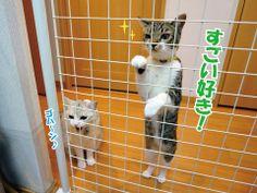 魅惑の猫缶|うにオフィシャルブログ「うにの秘密基地」Powered by Ameba