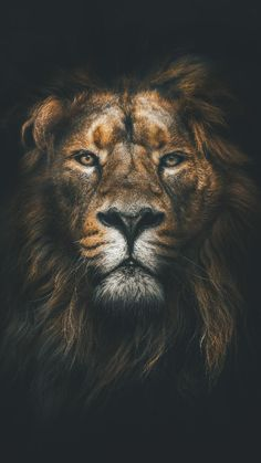 24 trendy ideas for lion art wallpaper iphone Tier Wallpaper, Animal Wallpaper, Orange Wallpaper, Animals Images, Cute Animals, Android Wallpaper 4k, 1080p Wallpaper, Wallpaper Lockscreen, Watercolor Wallpaper Iphone