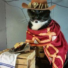 Cat Cosplay of the Feline variety.     I'm yo' huckleberry....