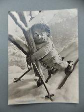 1960 gelaufen AK Postkarte Igel Mecki Ski Schnee Gut angekommen Diehl Hör zu