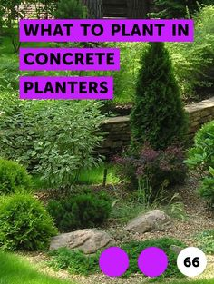 Learn What to Plant in Concrete Planters Concrete Yard, Concrete Planters, Types Of Ants, Ant Types, How To Kill Grass, Wood Mulch, Growing Grass, Wet Spot