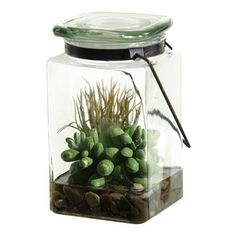 D&W Silks - D&W Silks Easter Grass And Sedum In Glass Jar - Easter Grass and Sedum Succulent