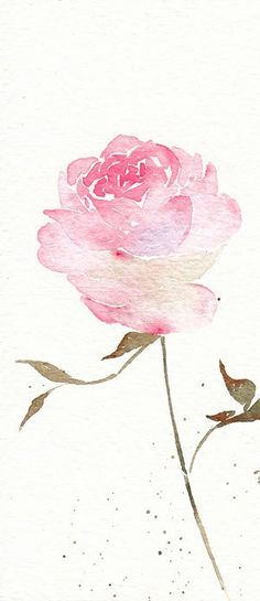 Pink rose watercolour watercolor painting