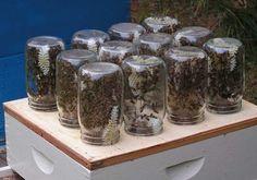 interesting...bees make honey in mason jars.